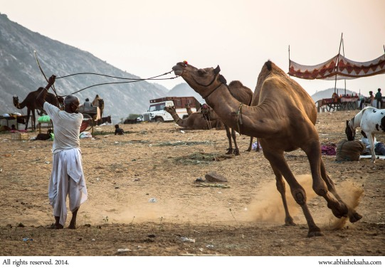 Read about the Pushkar fair in the Travel section