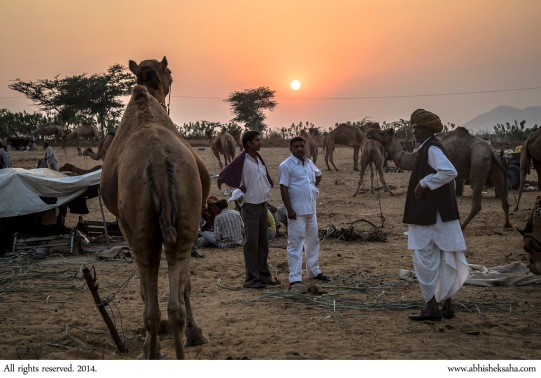 Prospective buyers discuss a camel before buying.