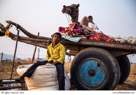 A camel trader's son with his family's cart and camel.